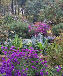 aster-settembrini-floravilla-blog