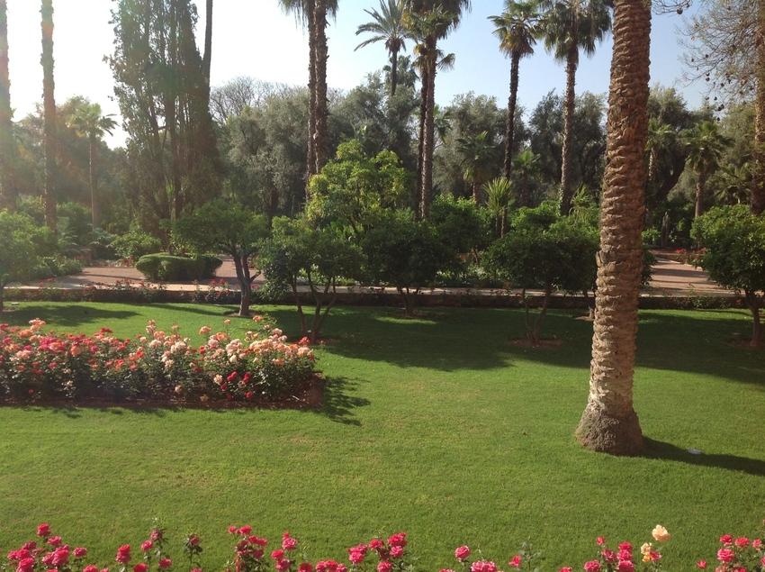 Fiori E Piante Da Giardino.Marrakech E I Suoi Giardini Segreti Mostra Mercato Fiori E
